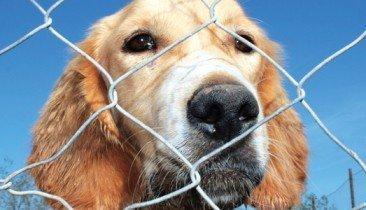 Tierheim Schoppen Hunde