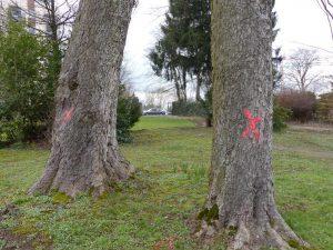 Die Markierungen an den Bäumen im Friedenspark schreckten die Ecolo-Lokalgruppe Eupen auf. Foro: OD